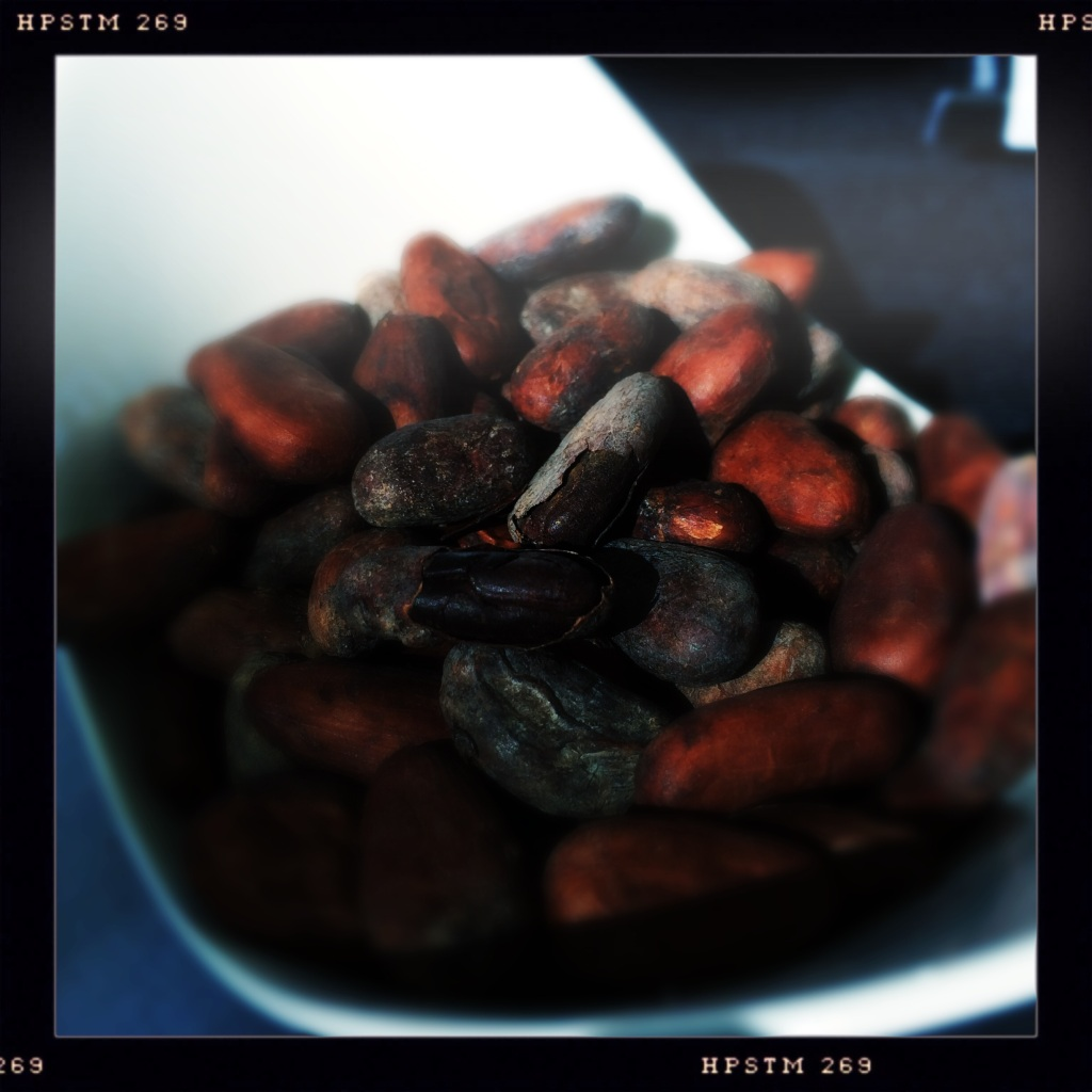 Raw Cocoa Beans from Doble & Bignall